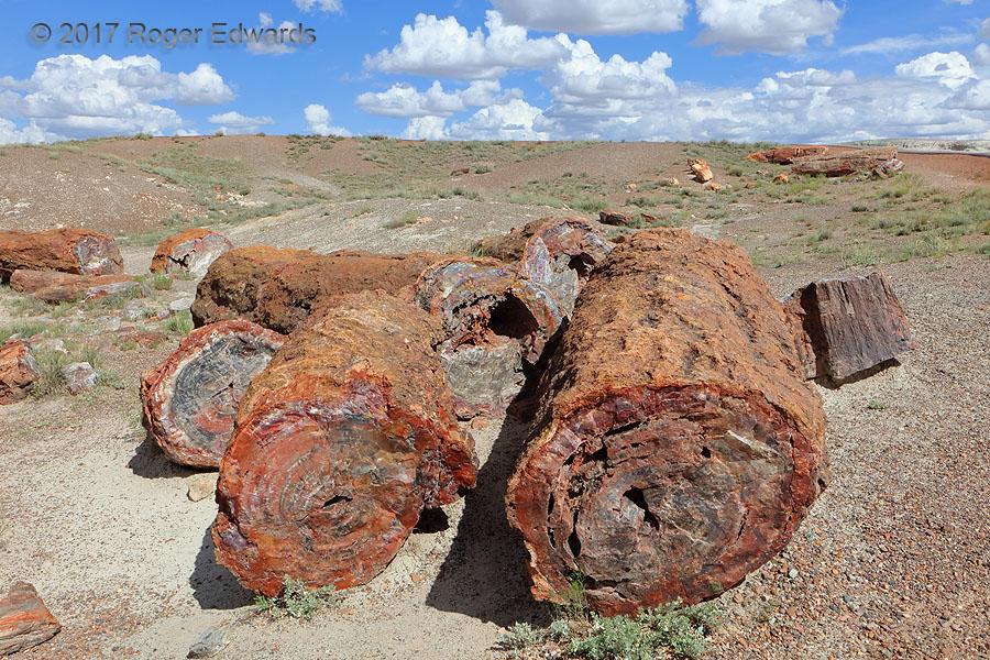 Petrified Forest Landscape (AZ)