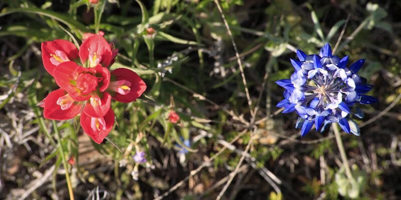 Texas Floral Companions